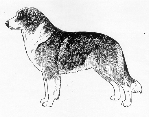 UKC Breed Standards: Atlas Mountain Dog