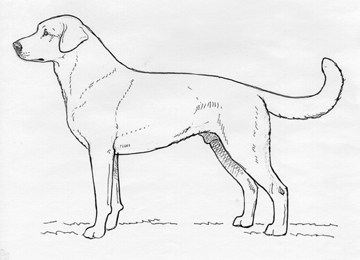 UKC Breed Standards: Akbash