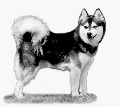 UKC Breed Standards: Alaskan Klee Kai