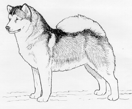UKC Breed Standards: Alaskan Malamute