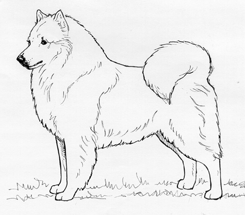UKC Breed Standards: American Eskimo