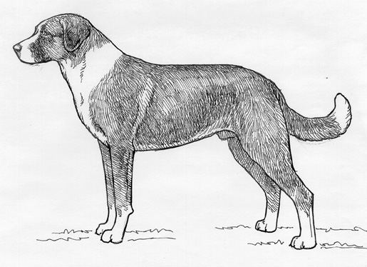 UKC Breed Standards: Anatolian Shepherd