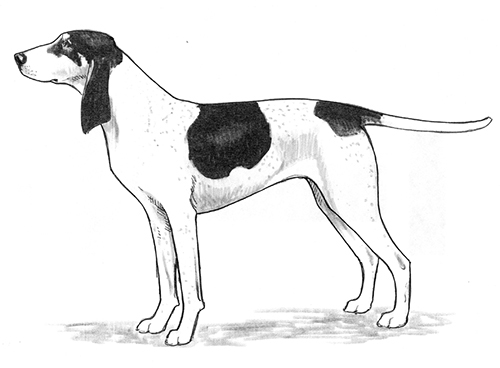 UKC Breed Standards: Ariegeois