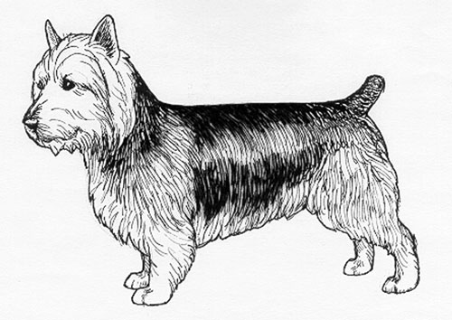 UKC Breed Standards: Australian Terrier