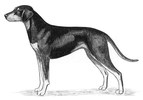 UKC Breed Standards: Austrian Black and Tan Hound