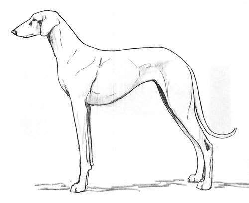 UKC Breed Standards: Azawakh