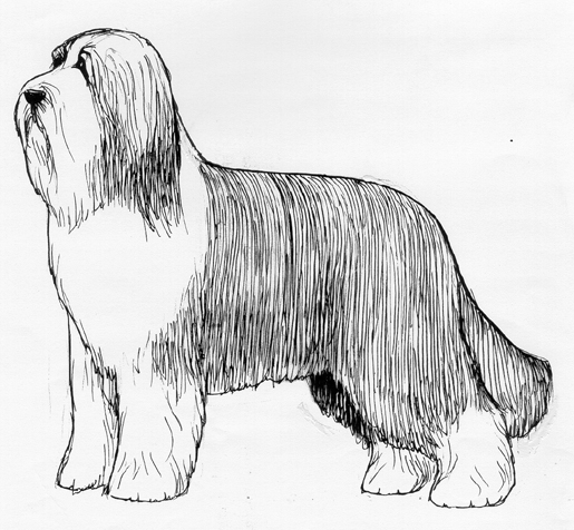 UKC Breed Standards: Bearded Collie