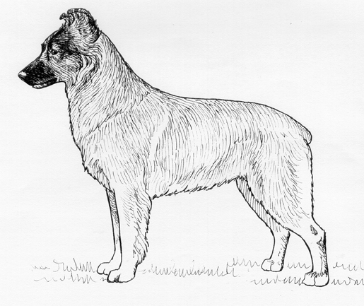 UKC Breed Standards: Berger des Pyrenees