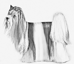 UKC Breed Standards: Biewer Terrier