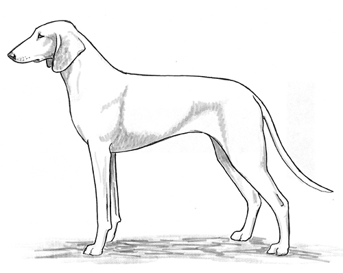 UKC Breed Standards: Billy