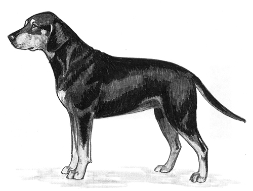 UKC Breed Standards: Black Forest Hound