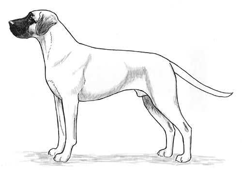 UKC Breed Standards: Black Mouth Cur