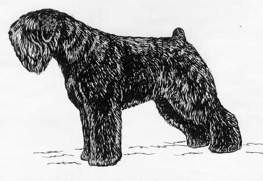 UKC Breed Standards: Black Russian Terrier