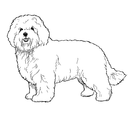 UKC Breed Standards: Bolognese