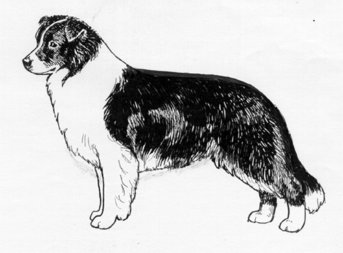 UKC Breed Standards: Border Collie