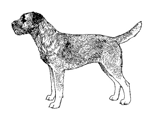 UKC Breed Standards: Border Terrier