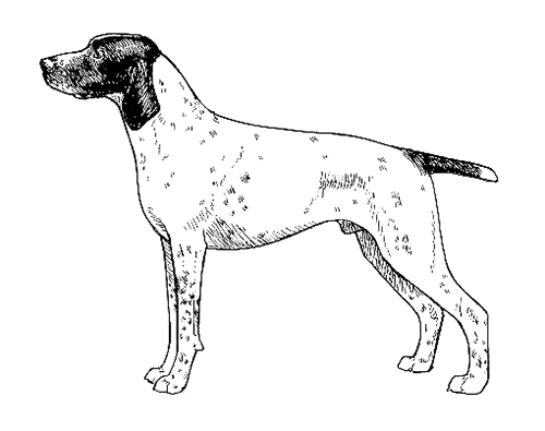 UKC Breed Standards: Braque d'Auvergne