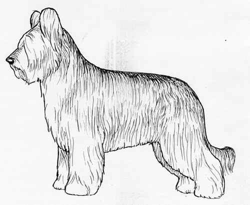 UKC Breed Standards: Briard