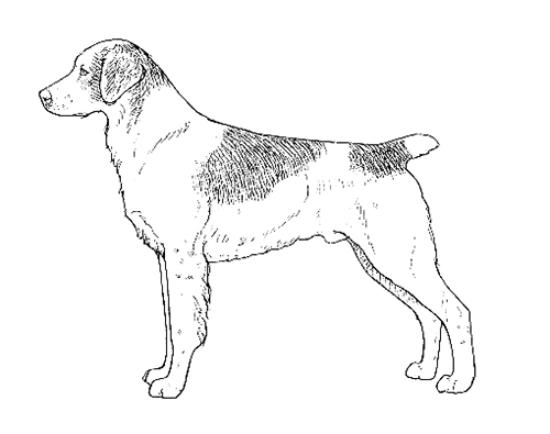 UKC Breed Standards: Brittany