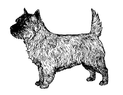 UKC Breed Standards: Cairn Terrier