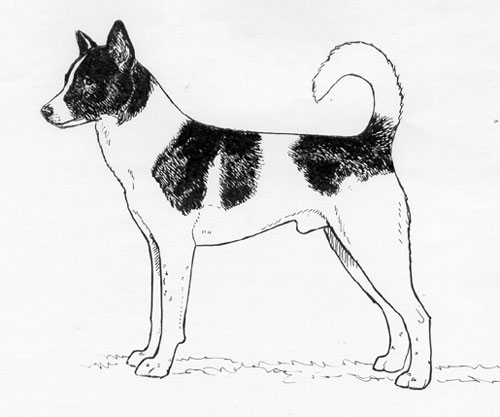 UKC Breed Standards: Canaan Dog