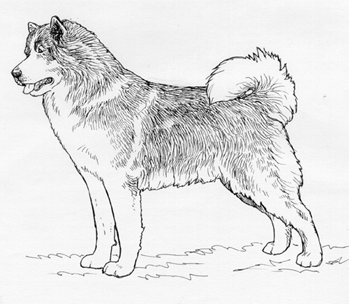 UKC Breed Standards: Canadian Eskimo Dog