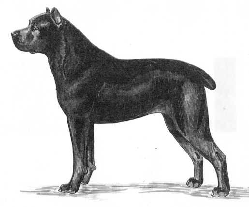 UKC Breed Standards: Cane Corso Italiano