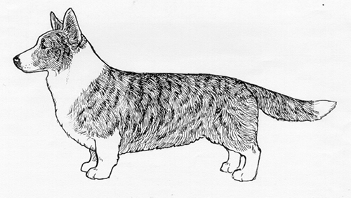 UKC Breed Standards: Cardigan Welsh Corgi