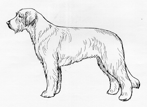 UKC Breed Standards: Catalonian Sheepdog