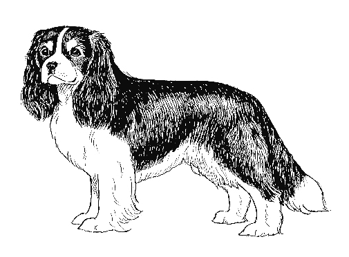 UKC Breed Standards: Cavalier King Charles Spaniel