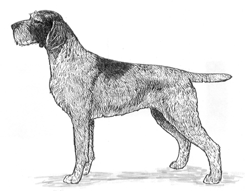 UKC Breed Standards: Cesky Fousek