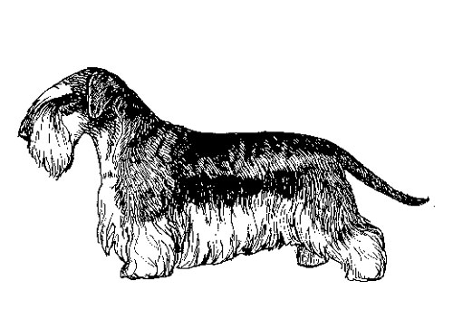 UKC Breed Standards: Cesky Terrier