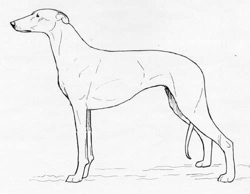 UKC Breed Standards: Chart Polski (Polish Greyhound)