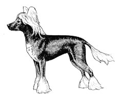 UKC Breed Standards: Chinese Crested Hairless