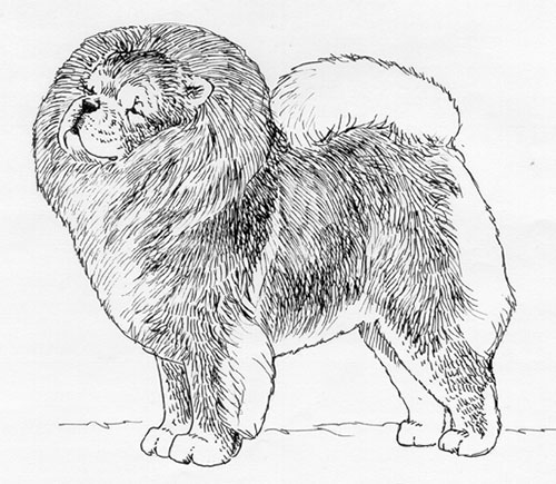 Breed Standards : Chow Chow | United Kennel Club (UKC)