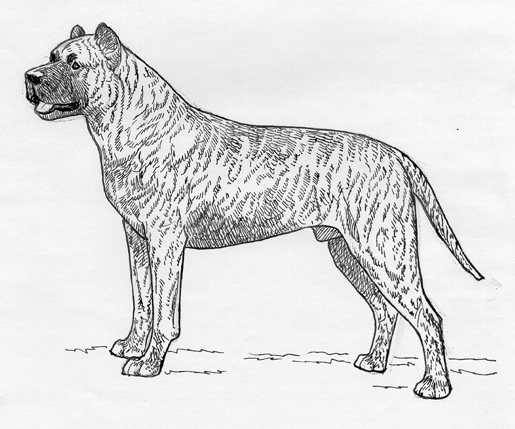 UKC Breed Standards: Cimarron Uruguayo