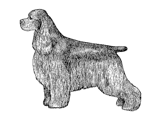 UKC Breed Standards: Cocker Spaniel
