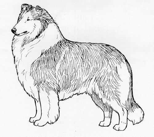 UKC Breed Standards: Collie