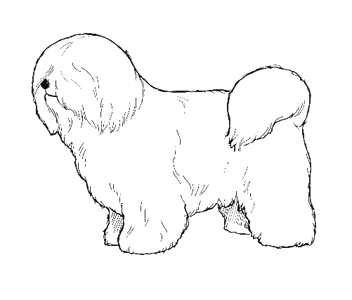 UKC Breed Standards: Coton De Tulear