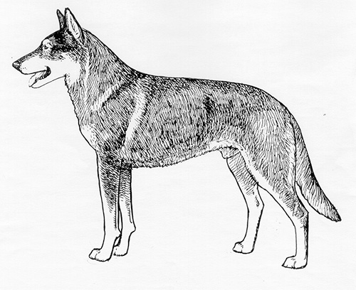 UKC Breed Standards: Czechoslovakian Vlcak