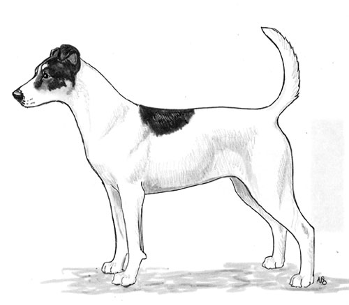 UKC Breed Standards: Danish Swedish Farmdog