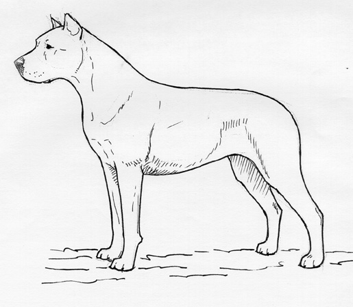UKC Breed Standards: Dogo Argentino