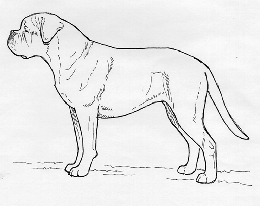 UKC Breed Standards: Dogue de Bordeaux