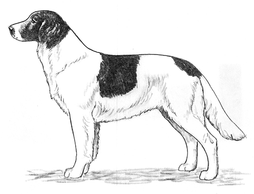UKC Breed Standards: Drentsche Patrijshond