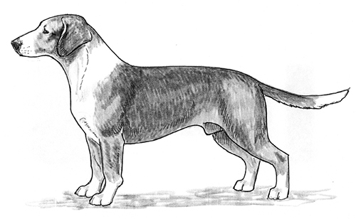 UKC Breed Standards: Drever
