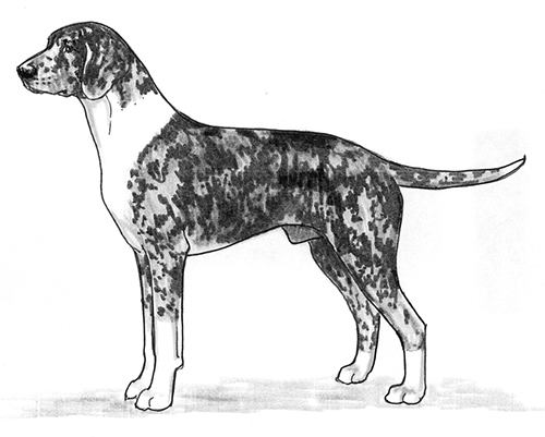 UKC Breed Standards: Dunker