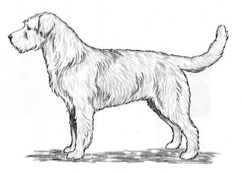 UKC Breed Standards: Dutch Smoushond