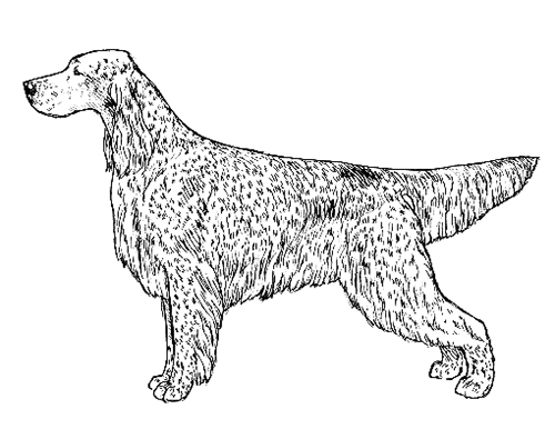 UKC Breed Standards: English Setter