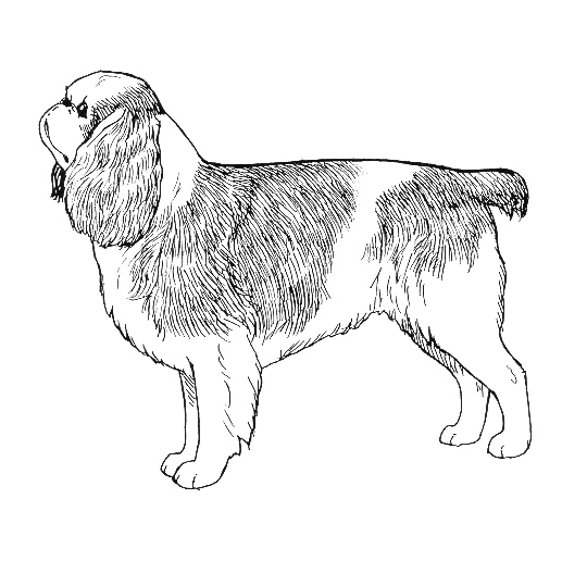 UKC Breed Standards: English Toy Spaniel