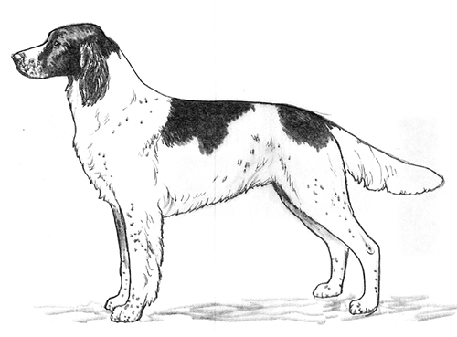 UKC Breed Standards: Epagneul Francais